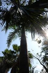 Cancun-20 (Victor Soria) Tags: springbreak cancun alic 2013 elsa70200 vicbest
