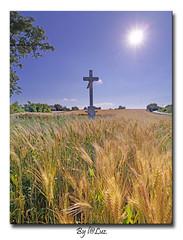 A mi Kenyerunk # 1 (laluzdivinadetusojos) Tags: field bread hungary cross pan rolling baranya vemend