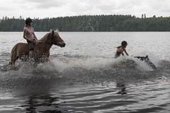 Splash! (JP Korpi-Vartiainen) Tags: summer horse woman lake speed swim finland countryside ride young hobby teen splash speedy hevonen kesä suonenjoki ranta järvi uimaranta maaseutu nainen vauhti harrastus kesäinen naiset nuoret uida nuori nuoriso vanhamäki pohjoissavo harrastaa vauhdikas jpko sisäsavo