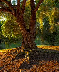 Evening Light (mojo2u) Tags: california tree evening sandiego balboapark nikon2470mm nikond800