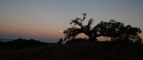 california moon color tree silhouette sunrise canon atmosphere hills moonset beltofvenus 5dmarkiii vision:mountain=0761