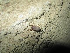 Insectos de mi casa (tarntulaschile) Tags: insectos escolopendra artrpodos