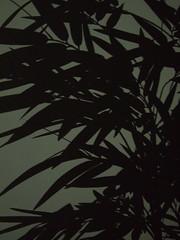 Bamboo shade ! (god_save_the_green) Tags: china light bw white house plant black france nature wall blackwhite flora shot ngc decoration indoor bamboo ornament shade embellishment environment forms chiaroscuro lightshade nationalgeographic environnement wayoflife artisticshot october2013 olympusepl1 godsavethegreen mathildeaudiau