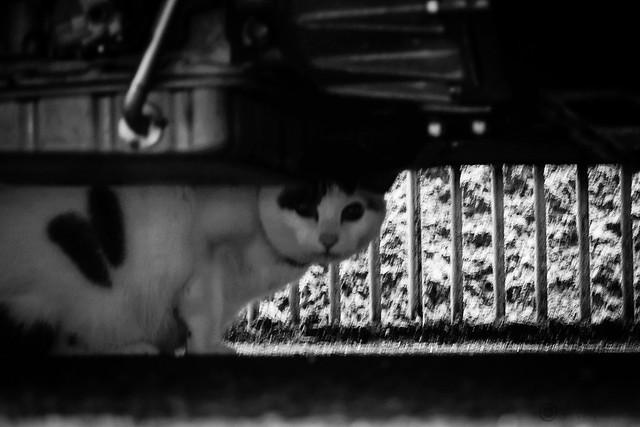Today's Cat@2013-11-07