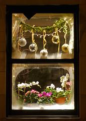 Joy in a Greenwich Village window #Flickr12Days (Jim Lambert) Tags: nyc newyorkcity windows ny newyork manhattan nighttime christmasdecorations greenwichvillage nighttimephotography winter2010 flickr12days