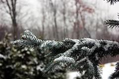 Dec. 14 Snow