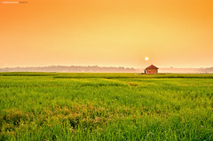 Bless you (Sandeep Somasekharan) Tags: morning orange sunrise landscape golden nikon hour 1024 d300s