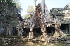 DSC02495 (dokumentiert) Tags: travel people travelling reisen asia asien cambodia kambodscha stones angkorwat relief temples tuktuk angkor ontheroad dokumentiert
