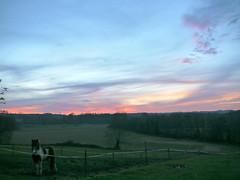 Cagnotte, Landes: Haizea est arrivée en courant du bas de la prairie mais nous n'avions rien à lui offrir ce soir. (Marie-Hélène Cingal) Tags: sunset sky france clouds ciel 40 nuages coucherdesoleil haizea landes sudouest aquitaine cagnotte paysdorthe