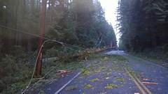 Miller Rd, Bainbridge Island (Puget Sound Energy) Tags: usa tree unitedstates wind january gales powerlines wash wa restoration bainbridgeisland winds 2014 outage kitsapcounty