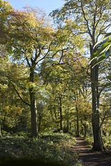 Sharphill Wood