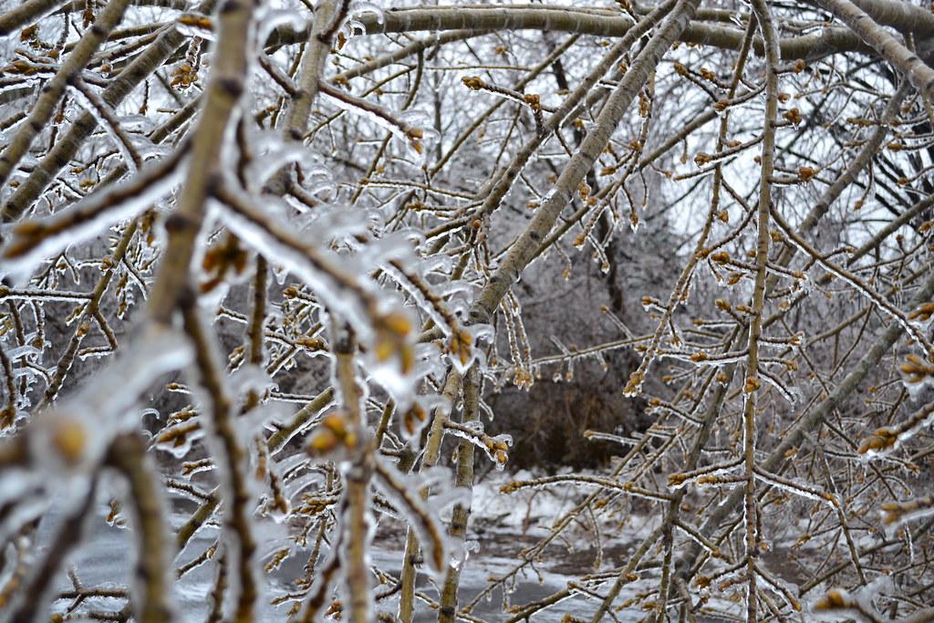 Through a frozen tree