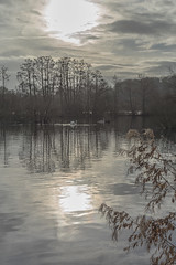 Stoxkers Lake (dave:w:) Tags: sunset lake reflections landscape mirror swans hertfordshire rickmansworth aquadrome