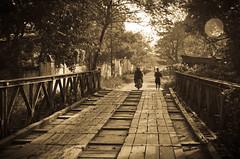 Bridge (Mariasme) Tags: bridge monochrome sepia vanishingpoint wooden contrejour madeofwood favescontestwinner herowinner ultraherowinner gamesweepwinner favescontestfavoriteson favescontesttopseed favescontestfavored darkhorsewinner