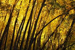 IMG_0453 (berserker170) Tags: arbol otoño puertopeña puerto peña river rio hoja leaf eos 7d canon fall autumn tree extremadura flickrexploreme