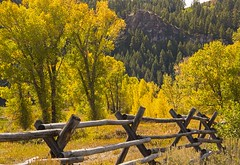 fence in the Tetons in the fall (Mysophie08) Tags: trees fence landscape unitedstatesofamerica wyoming infocus aspentrees grandtetonnationalpark highquality bigmomma autumnfall herowinner storybookwinner gamex3winner gamex2sweepwinner