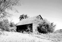 shy barn (David Sebben) Tags: white black tree face barn rural ir shy iowa hiding