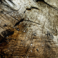 Sgraffito (Carolbreeze99) Tags: wood shadow abstract texture contrast square line crack weathered plank dubrovnik tonal sgraffito sawn