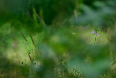 Purple nature (VitorSousa1975) Tags: flores flower macro nature forest flora natureza flor floresta vitor sousa