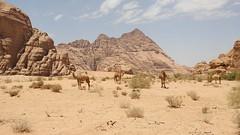 Mt Koya, Japan. (thepictureguide) Tags: wadirum travel destination desert camels forest germany bavaria paraty brazil unesco colonialtown cuba havana bosniaandherzegovina mostar bridge cadaques spain mtkoya japan