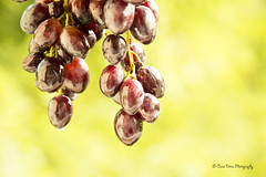 Grapes (Oana Dima) Tags: grapes black tasty red vitamins fruits fresh nature amazing wine autumn blackgrapes redblackfruits green photography photooftheday natural desert sweet closeup ripe berry agriculture dessert organic crop
