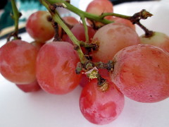 Bunch Of Grapes. (dccradio) Tags: lumberton nc northcarolina robesoncounty food eat fruit grapes bunch redgrapes