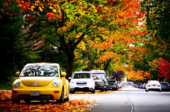 Streets in Autumn in Vancouver BC Canada (TOTORORO.RORO) Tags: panasonic zs100 bc canada greatervancouver britishcolumbia colors vancouver view light travel tourist tourism popular visitor attractions living tranquility glowing autumn colours maple leaves red yellow green trees season    vw volkswagen beetle car