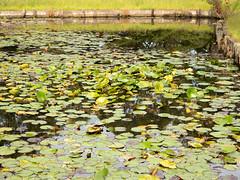 P1620066 (Rambalac) Tags: asia japan lumixgh4 pond water азия япония вода пруд