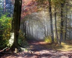 (Alexander Burkhardt) Tags: wald licht nebel kappelberg stuttgart natur landschaft baum herbst farbe weg platinumheartaward