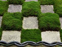 Checkerboard moss (Tim Ravenscroft) Tags: moss garden hobo tofuji kyoto japan zen buddhist