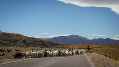 Owners of the road (Silver Nicte) Tags: neuquen alumine southamerica south road camino ruta gaucho landscape paisaje montaa mountain andes losandes animal canon canont2i 1855 wideangle circuitopehuenia pehuenia