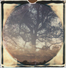 RoidWeek (mikelanst) Tags: roidweek impossibleproject i1 doubleexposure