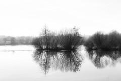 Fog (jc.mendo) Tags: jcmendo canon 7d 35mm fog niebla arboles trees rio river reflection reflejo clave alta
