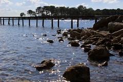 shiny (bijoubijoufr) Tags: lake hourtin gironde shiny autumn