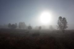 Sunshine through Mist (Tsalbedahs) Tags: trees mysterious spooky haze veluwe sunrise