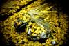 (TommyOshima) Tags: leica leicanoctilux50mmf10 f10 noctilux winter leicam7 portra800 kodak portra shinjuku kabukicho goldengai ginkgo yellow leaf