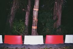 _20_00413 (Lee Sydney) Tags: kodakcolourplus200 canoneos500 35mmfilm 35mmphotography filmphotography film filmisnotdead fall autumn autumn2016 fall2016 bristol uk england britain bowerashtoncampus bowerashton uwe uweuk uwebristol dividers red white tree trunk flash evening