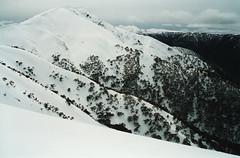 Mount Feathertop (omnia2070) Tags: australia australian alps mount feathertop victoria second highest snow ridge tree snowgum gum eucalypt cornice cloud valley winter wintry cold