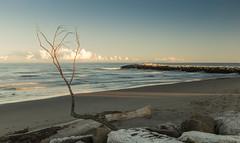 rama (Franco Boetto) Tags: spiaggia mare onde diga cielo nuvole ramo tramonto rosolinamare casoni autunno fotografia vento veneto 2016 fujifilm fujix x100t 35mm albero azzurro sabbia marmo orizzonte blu f16