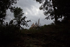 IMG_3228 (douaystephane) Tags: daudet fontvieille moulin provence