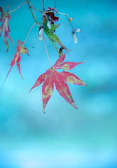 DSC_2520 (megumi.ram) Tags: japan nikon autumn nature red redleaves