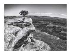 Grand View Point Trail, Canyonlands National Park, Utah, #68 (Vincent Galassi) Tags: lasvegas nevada usa grandviewpointtrail canyonlandsnationalpark utah 68pentax645d pentax6735mm 1200s f16 iso200 landscape black white canyonlands rocks park
