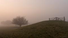 Misty Morn (Mandy Willard) Tags: 366 0612 pevenseymarsh fence mist trees