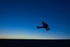 Jumparound en Bolonia, Cádiz. (Rafa Velazquez) Tags: jump bolonia cadiz spain jumping jumparound tarifa