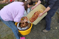 Filling homemade apple press (Local Food Initiative) Tags: permaculture apple day apples press pressing cider group sustainable orchard