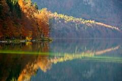 Autumn visions (Alpsee, Bayern) (armxesde) Tags: pentax ricoh k3 germany deutschland bayern baviera bavaria allgäu alpsee lake see wasser water reflection spiegelung tree baum herbst fall autumn farben colours golden