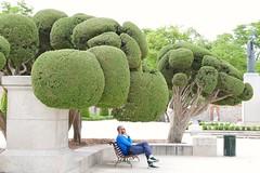 man in park (linwujin) Tags: europe euro spain madrid tree man green park panasonic lx100 chair