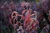 Punane (Jaan Keinaste) Tags: pentax k3 pentaxk3 eesti estonia loodus nature punane red