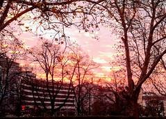 (black_purple_bg) Tags:     autumn bulgaria sofia    outdoor serene tree  sunset