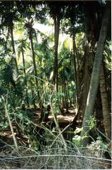 198112.238.indien.pondicherry (sunmaya1) Tags: india puducherry